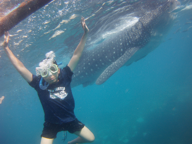 Travel Guide To Donsol's Butanding or Whale Shark in Sorsogon