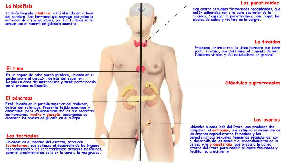 Endocrinologia y Sexualidad