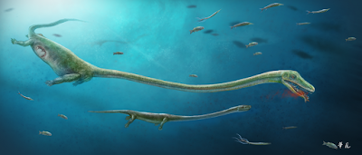 Fóssil marinho de 250 milhões pode ser o primeiro a ter gestação