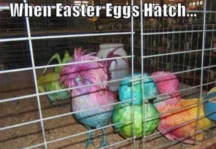 Easter eggs = Easter Chickens