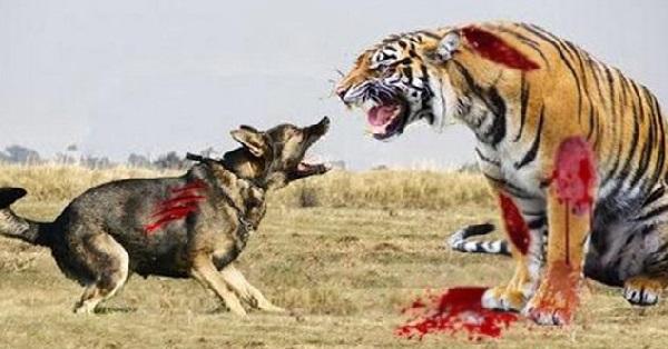 """Hai câu chuyện """"Hổ gặp chó điên và Thiên lý mã"""" đầy ý nghĩa, đáng suy ngẫm"""