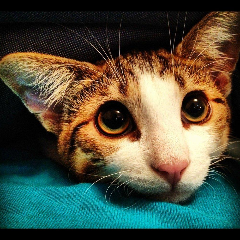 Funny Cats: Funny Cats - Part 16 (42 Pics)