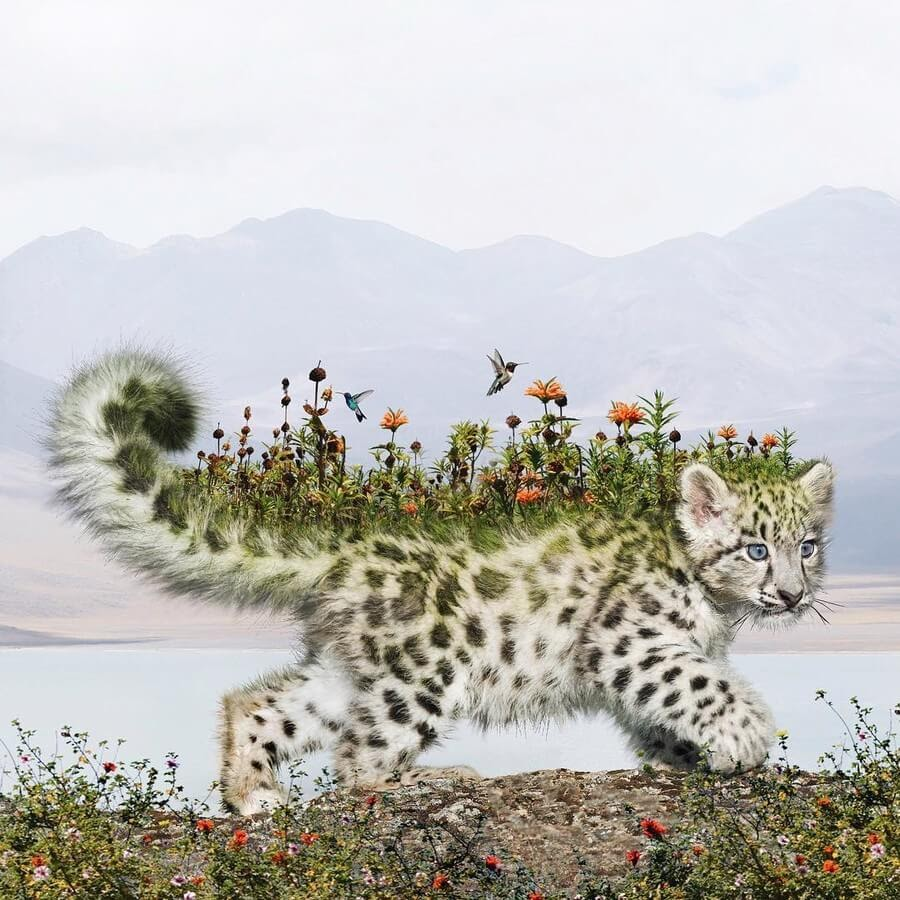 04-Snow-leopard-Kitten-Luisa-Azevedo-www-designstack-co