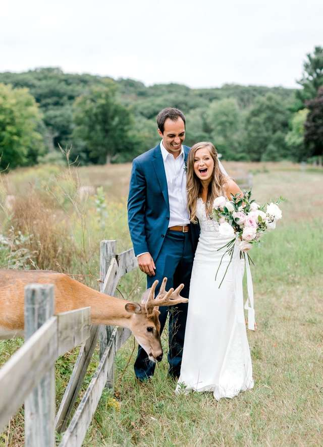 Wild Deer Crashed Wedding Photoshoot To Eat The Bride's Bouquet