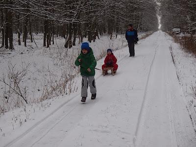 Puszcza Niepołomicka, zima, jazda na sankach, Rezerwat Lipówka, grzyby nadrzewne zimą