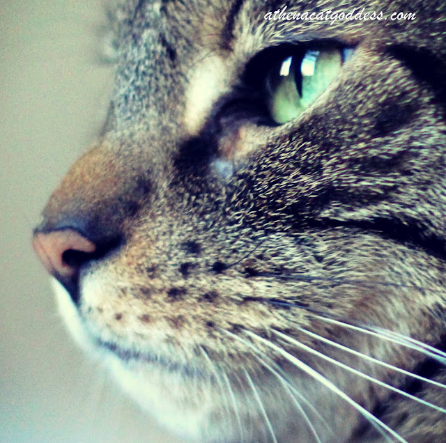 cat whiskers close-up