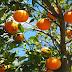 Ministério Público Federal investiga supostas candidaturas laranjas em Sergipe
