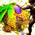 Polisi Tangkap 7 Pengedar Ganja di Skouw Mabo