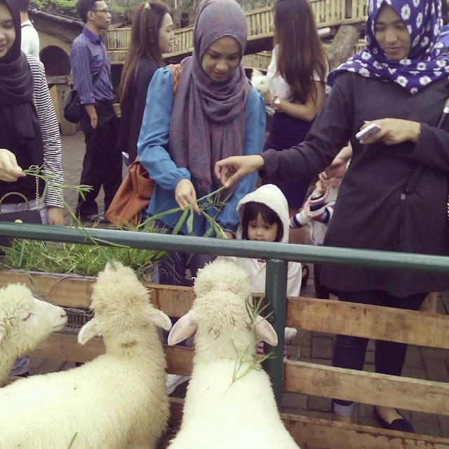 foto peternakan mini di farm house