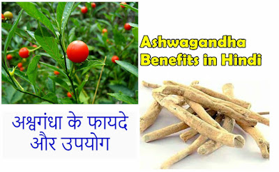Ashwagandha ke fayde, Ashwagandha benefits in hindi