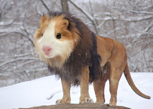 01-Guinea-Lion-Gyyp-Reddit-Animal-Mashups
