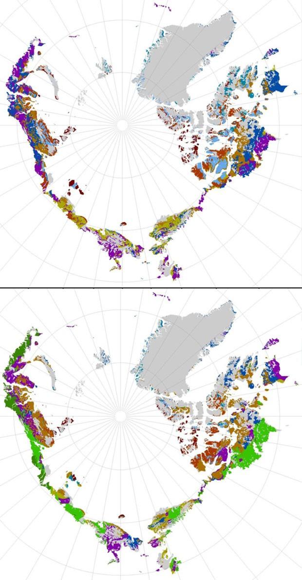 O Círculo Polar Ártico pode Sofrer Invasão de Vegetação em Consequência do Aquecimento Global