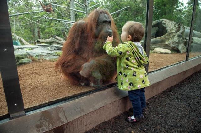 Passeio no San Diego Zoo com as crianças