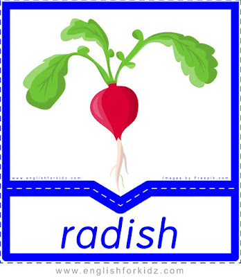 Radish - English flashcards for the fruits, vegetables and berries topic