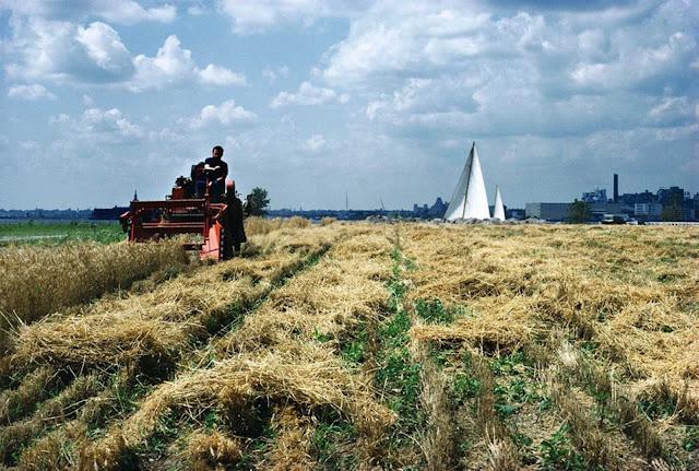 Campo de trigo en Nueva York - 1982