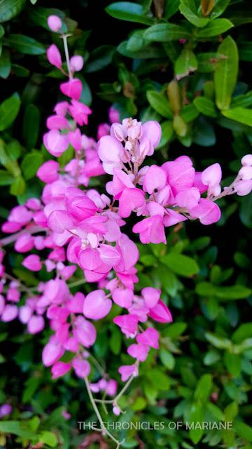 tainan flower