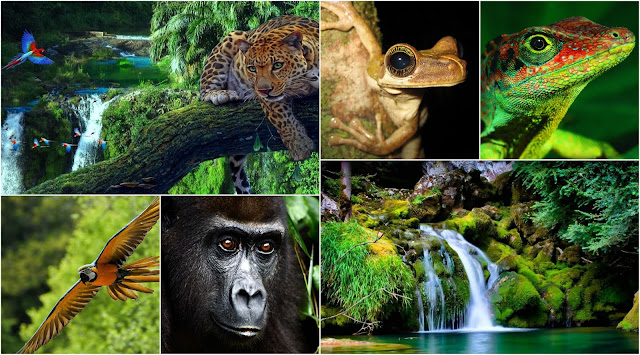 Wildlife of Amazon Rainforest