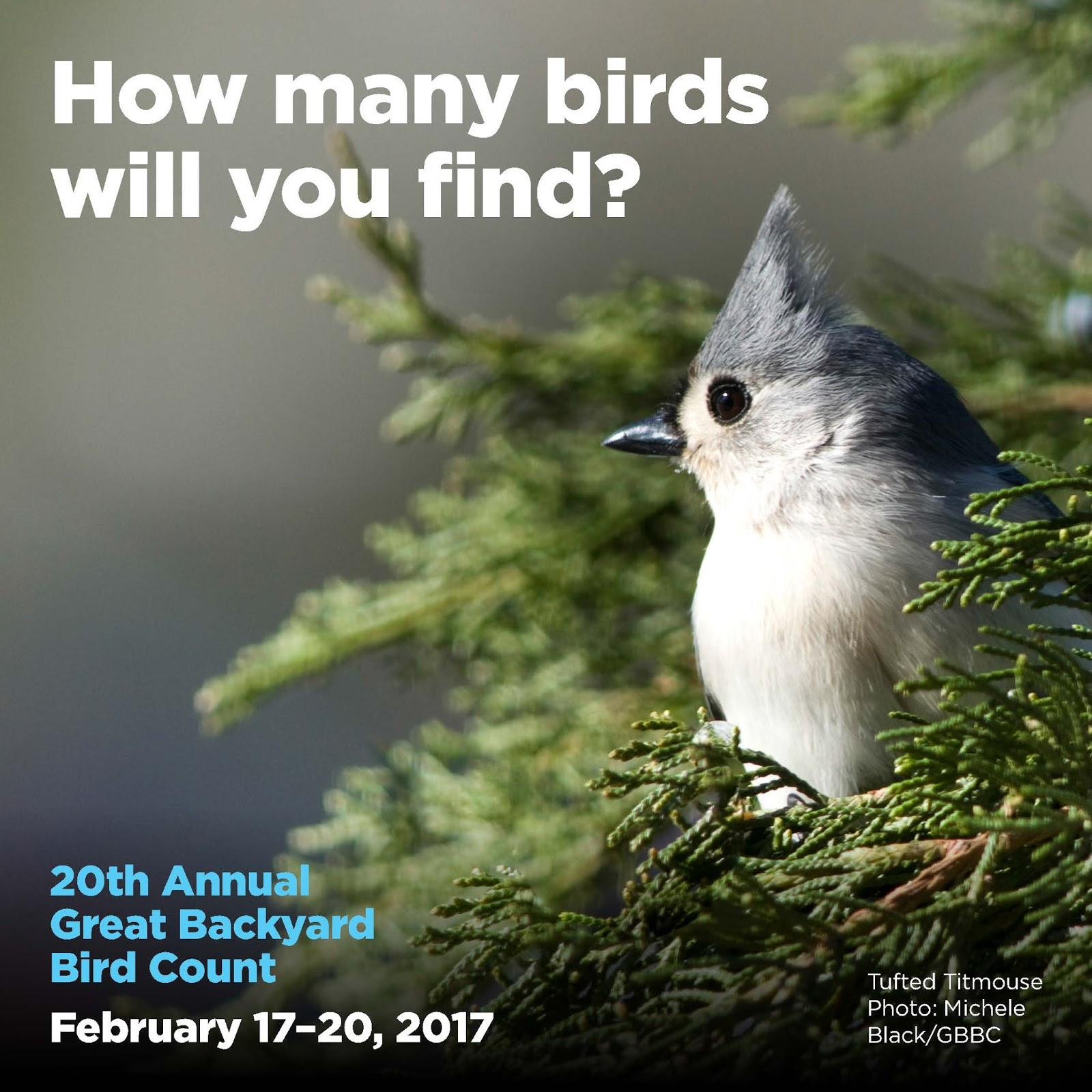 wild birds unlimited january 2017