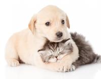 من أكثر ذكاء هل الكلب أو القط؟