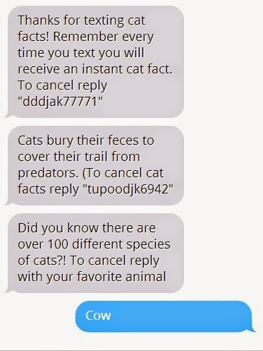 larry s latest cat facts part one