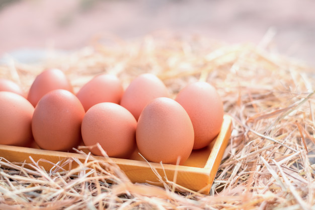 Analisa Bisnis Peluang Usaha Ternak Ayam Petelur Dengan Modal