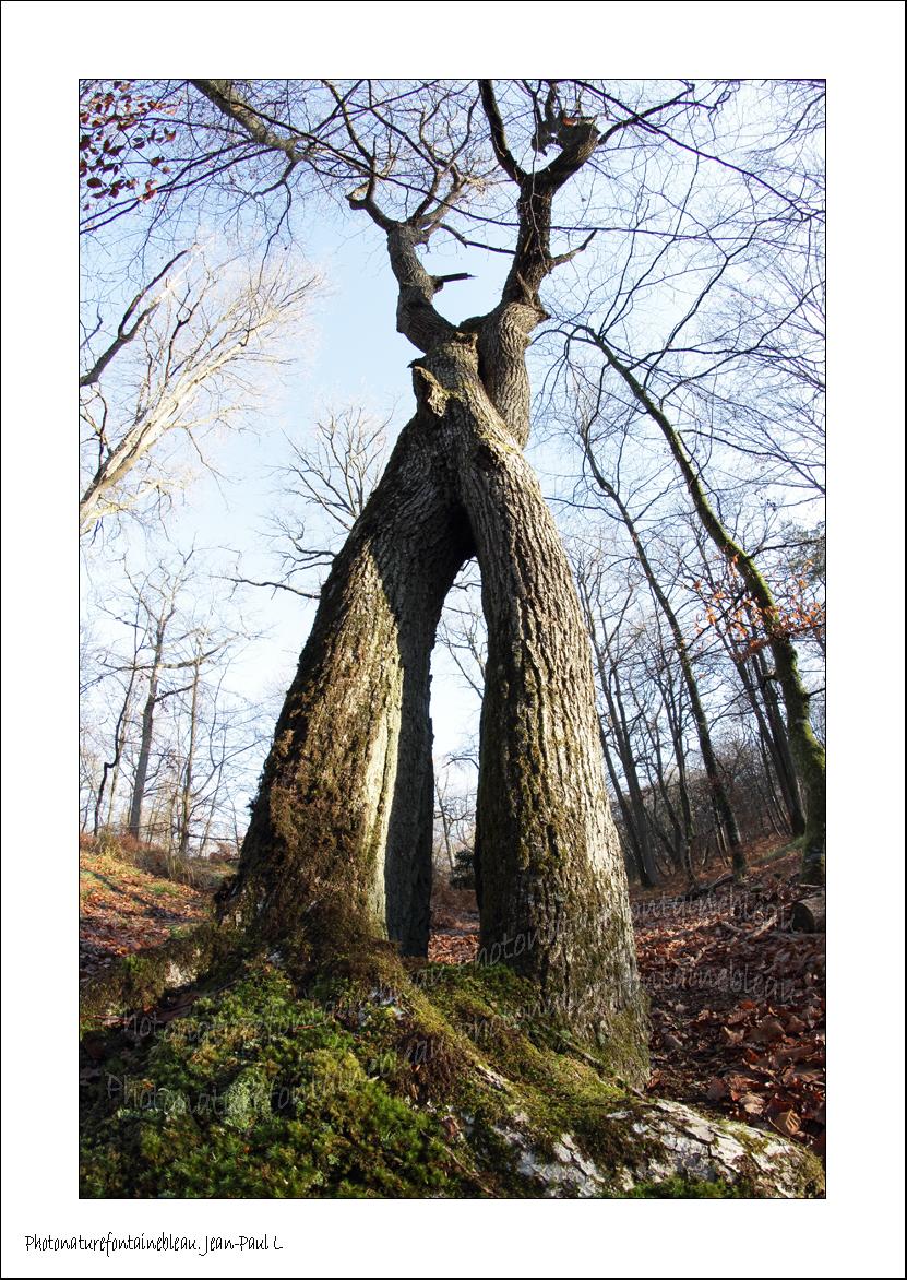 comment savoir si un arbre est class taille haie. Black Bedroom Furniture Sets. Home Design Ideas