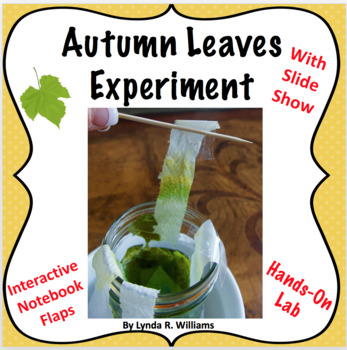autumn leaf activity for 6th grade