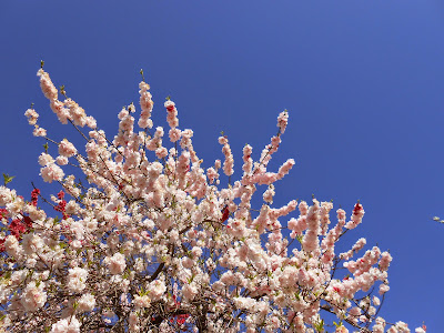 spiritual bliss, bliss, spiritual awakening, flowers, tree, blue sky