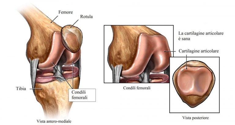 Rehabilitación: Anatomía de rodilla