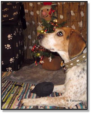 Socken gehören nicht an den Weihnachtsbaum