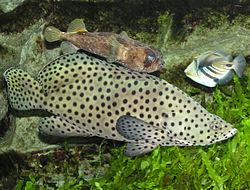7 Jenis Ikan Air Payau yang Sering Dibudidayakan