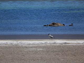 Lagunas Miscanti e Miñiques Atacama