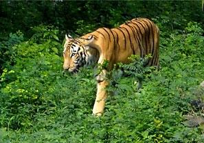 Welcome to Sundarban