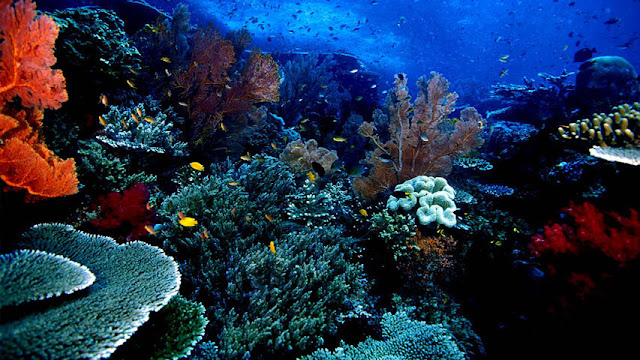 keindahan laut bunaken