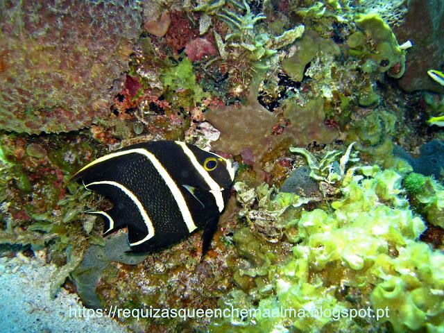 Fundo do mar Cozumel