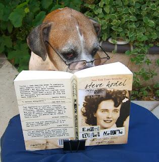 como cuidar de cães idosos
