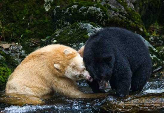 Most Amazing Extinct Animals