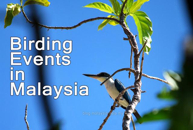 Malaysia Bird Watching Events