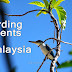 Birding Events in Malaysia