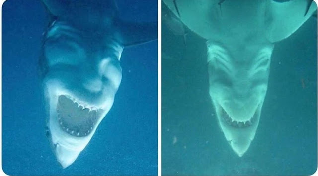 shark+laugh.jpg