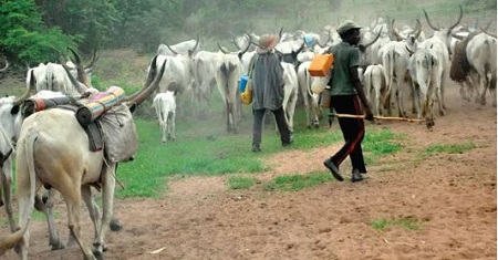 Panic In Ondo As 'Herdsmen' Attack Farmers In Broad Daylight