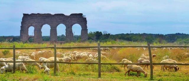 Acueducto y ovejas en medio del Parco degli Acquedotti en Roma