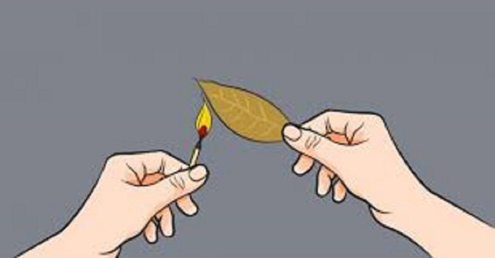 Κάψτε ένα φύλλο δάφνης στο σπίτι σας: Το γιατί θα σας αφήσει με το στόμα ανοιχτό