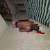 HOMICÍDIO VIOLENTO NESTE FINAL DE SEMANA EM BELMONTE