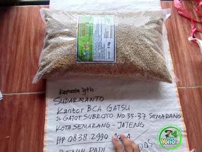 Benih Padi Pesanan SUDARMANTO Kota Semarang, Jateng.   Benih Sebelum di Packing.