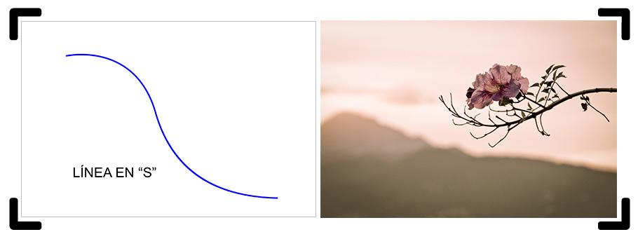 Línea curva o en S