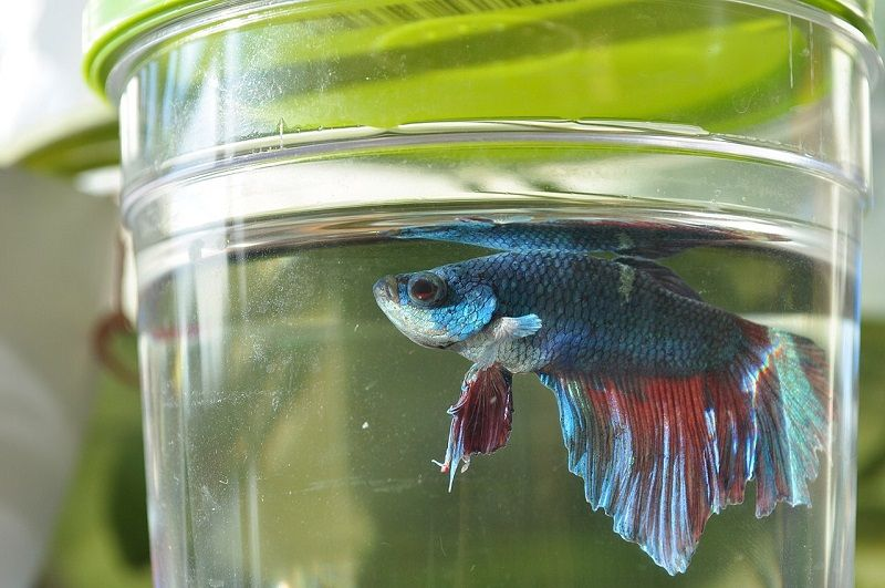 Image The Foolproof Can a Betta Fish Live in a Bowl, Strategy