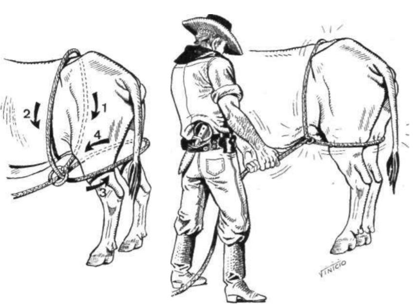 metodo-almeida-barros-derrubamento-bovinos