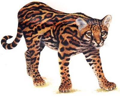 Jaguatirica ou Gato do Mato (Leopardus tigrinus)