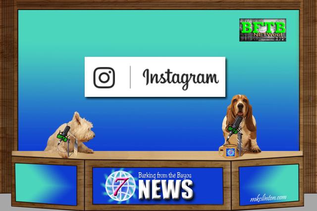 BFTB NETWoof News report on Instagram